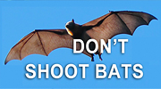 don't shoot bats